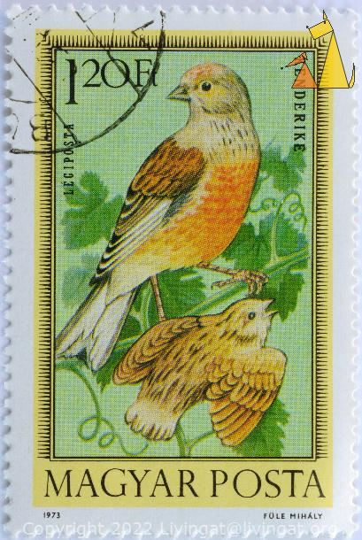 Linnet with Young, Magyar, Hungary, stamp, bird, young, Carduelis cannabina, Posta, Kenderike, Legiposta, 1.20 Ft, Fule Mihaly, 1973, Magyar