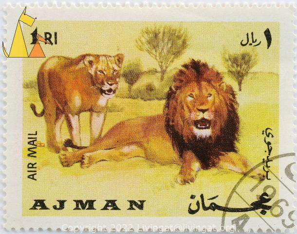 Lion Pair, Ajman, UAE, stamp, mammal, Air Mail, 1 Rl, Panthera leo
