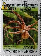 Long-armed octopus, Royaume du Cambodge, Cambodia, stamp, fish, Postes, 1999, 500 R, Octopus macropus
