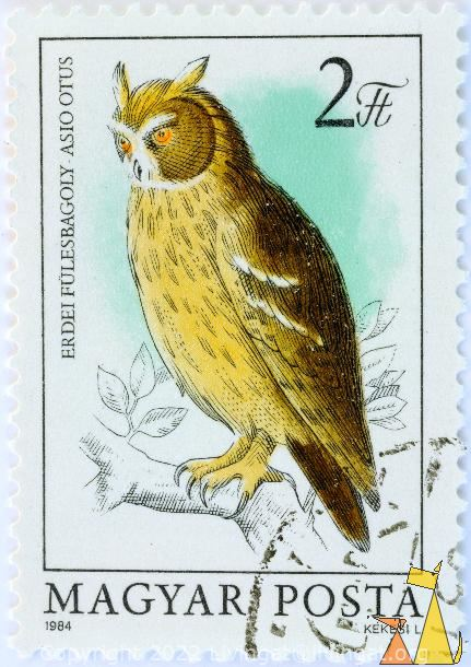 Long-eared Owl in a tree, Magyar, Hungary, stamp, bird, owl, Posta, 1984, Kekesi L, 2 Ft, Erdei Fulesbagoly, Asio otus