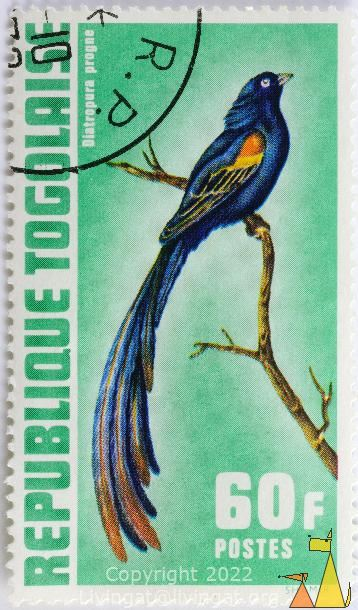 Long-tailed Widowbird, Republique Togolaise, Togo, stamp, bird, long tail, Postes, Shamir, 60 F, green, Diatropura progne, Euplectes progne
