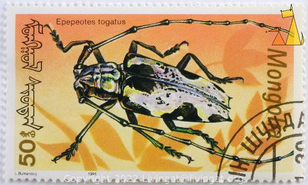 Longhorn Beetle, Mongolia, stamp, insect, 1991, 1.20, bug, L Bumandorj, Epepeotes togatus, Paraepepeotes togatus