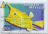 Longhorn Cowfish, South Africa, stamp, fish, Chris van Rooyen, 2000, 80 c, Lactoria cornuta