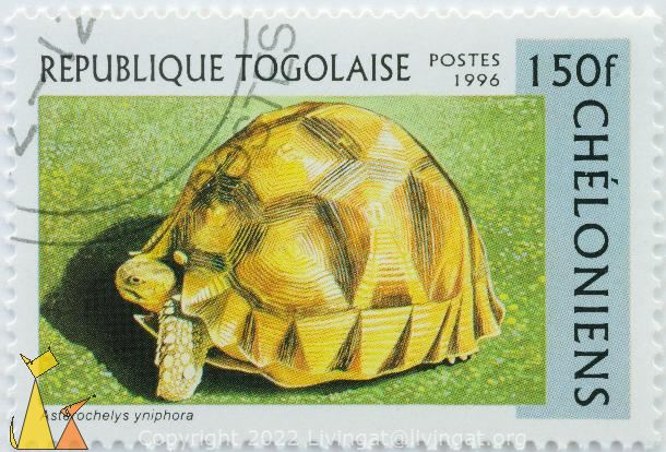 Madagascar Angulated Tortoise, Republique Togolaise, Togo, stamp, reptile, turtle, Postes, 1996, Cheloniens, 150 f, Asterochelys yniphora, Astrochelys yniphora