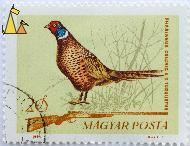 Male Common Pheasant, Magyar, Hungary, stamp, bird, rifel, hunting, posta, 20 f, 1964, Gall F, Phasianus colchicu, shotgun, game bird
