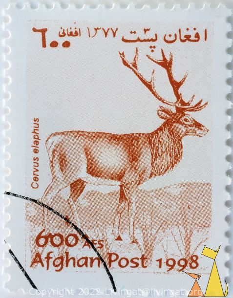 Male Red Deer, Afghan, Afghanistan, stamp, mammal, 600 Afs, Post, 1998, Cervus elaphus
