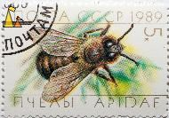 Male Western Honeybee, CCCP, Russia, stamp, insect, bee, 1989, 5 K, Apidae, Apis mellifera
