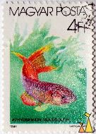 Manycolored lyretail, Magyar, Hungary, stamp, fish, Posta, 4 Ft, 1987, Varga Pal, Aphyosemion multicolor