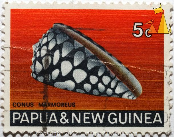 Marbled Cone, Papua and New Guinea, Papua New Guinea, stamp, shell, Conus marmoreus, 5 c