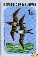 Mascarene Least Frigatebird, Republic of Maldives, Maldives, stamp, bird, flying, 1 L, Fregata ariel iredalei