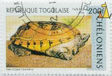 Mexican Giant Musk Turtle, Republique Togolaise, Togo, stamp, reptile, turtle, Postes, 1996, Cheloniens, 200 f, Staurotypus triporcatus