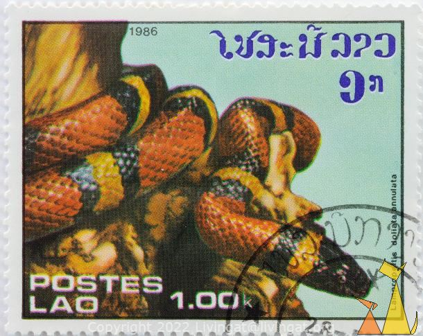 Mexican Milk Snake, Lao, Laos, stamp, reptile, snake, Lampropeltis doliata annulata, Mexican milk snake, 1.00 k, Postes, 1986