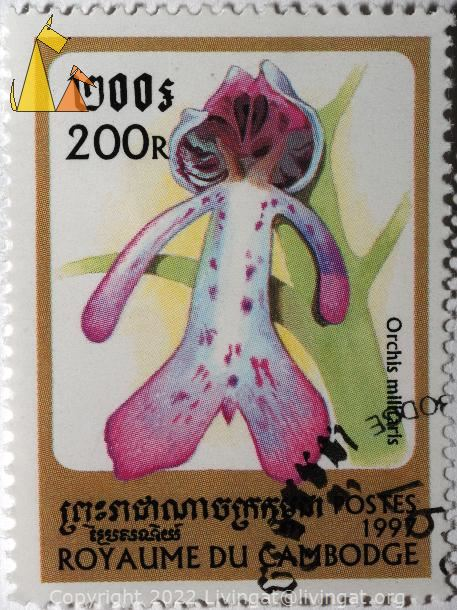 Military orchid, Royaume du Cambodge, Cambodia, stamp, plant, flower, orchid, 1997, Postes, 200 R, Orchis militaris