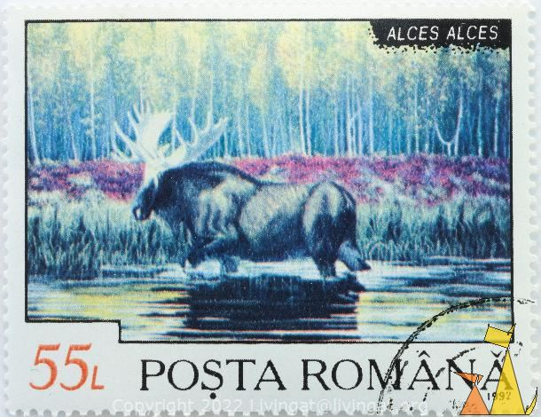 Moose in Water, Romana, Romania, stamp, mamma, Alces alces, 55 L, Posta, 1992