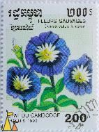 Morning Glory, Etat du Cambodge, Cambodia, stamp, flower, Fleurs Sauvages, 200 R, Postes, 1993, Convolvulus tricolor