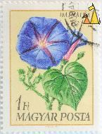 Morning glory, Magyar, Hungary, stamp, plant, flower, 1 Ft, Posta, Fule M, Hajnalka, Ipomoea tricolor