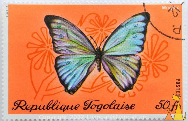 Morpho spp, Republique Togolaise, Togo, stamp, insect, butterfly, Postes, Shamir, 50 fr, Morpho spp