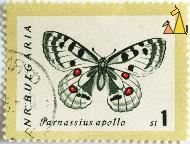 Mountain Apollo, NR Bulgaria, Bulgaria, stamp, insect, butterfly, 1 St, Parnassius apollo
