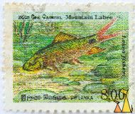 Mountain Labeo, Sri Lanka, stamp, fish, 8.00, Labeo fisheri