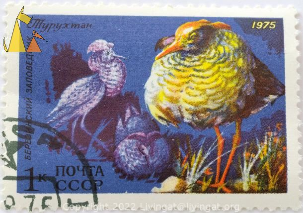Mr and Mrs Ruff, CCCP, Russia, stamp, bird, 1975, 1K, Philomachus pugnax