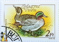Mr and Mrs Teal, Magyar, Hungary, stamp, bird, duck, Varga Pal, 1988, Posta, 2 Ft, Anas crecca, Gsörgb rece