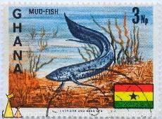 Mud-Fish, Ghana, stamp, fish, flag, 3 Np, Harrison and Sons Ltd, Clarias anguillaris