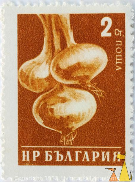 Nice Onions, Bulgaria, stamp, plant, crop, farming, Allium cepa, 2 Ct