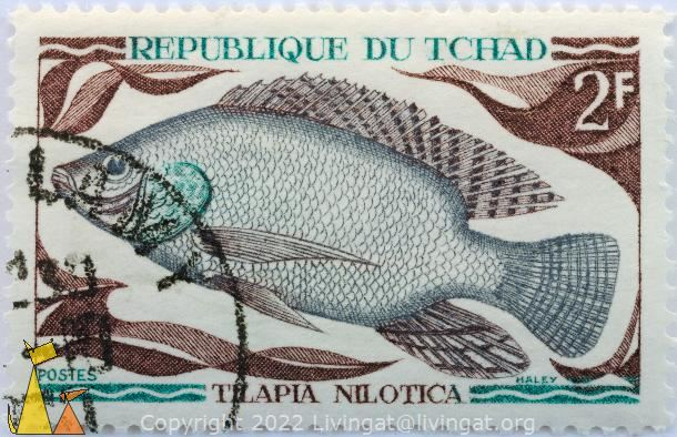 Nile tilapia, Republique du Tchad, Chad, stamp, fish, 2 F, Postes, Tilapia nilotica, Haley