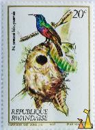 Northern Double-collared Sunbird, Republique Rwandaise, Rwanda, stamp, Harrison and Sons Ltd, 1982, Jean van Note, 20 c, Nectarinia preussi kikuyuensis, Nectarinia preussi