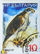 Northern Goshawk, Bulgaria, stamp,bird, bird of prey, 10 ct, 87, nowa, Accipiter gentillis, Accipiter gentilis