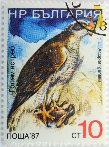 Northern Goshawk, Bulgaria, stamp, bird, bird of prey, 10 ct, 87, nowa, Accipiter gentillis, Accipiter gentilis