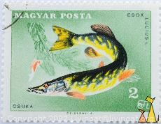 Northern Pike, Magyar, Hungary, stamp, fish, 2 Ft, posta, Cziglenyi A, Csuka, Esox lucius