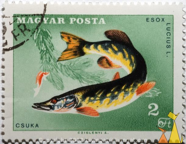 Northern Pike, Magyar, Hungary, stamp, fish, 2 Ft, posta, Cziglenyi A, Csuka, Esox lucius, Esox lucius L