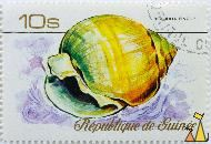 Obtuse demoulia, Republique de Guinee, Guinea, stamp, shell, 10 s, Demoulia pinguis, Demoulia obtusata