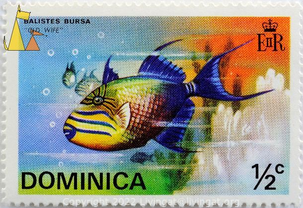 Old Wife, Dominica, stamp, fish, Old Wife, Balistes bursa, EIIR, ½ c, Sufflamen bursa