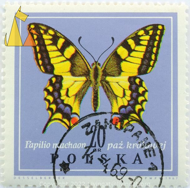 Old World Swallowtail, Polska, Poland, stamp, insect, butterfly, 20 Gr, Desselberger, PWPW, 1967, Papilio machaon, Paz krolowej