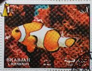 Orange Clownfish, Sharjah and Dependencies, Sharjah, UAE, stamp, fish, Air Mail, 1 Rl, Amphiprion percula