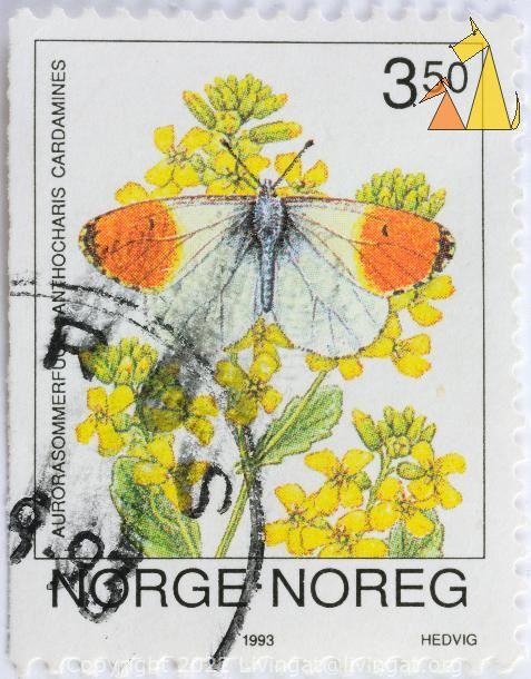 Orange Tip on Yellow, Norge, Noreg, Norway, stamp, flower, insect, butterfly, Hedvig, 1993, 3.50, Aurorasommerfugl, Anthocharis cardamines, Barbarea stricta