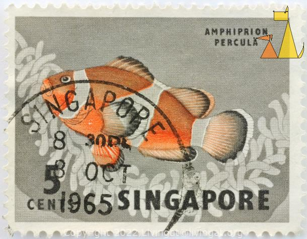 Orange clown, Singapore, stamp, fish, Orange clownfish, Amphiprion percula, 5 cents