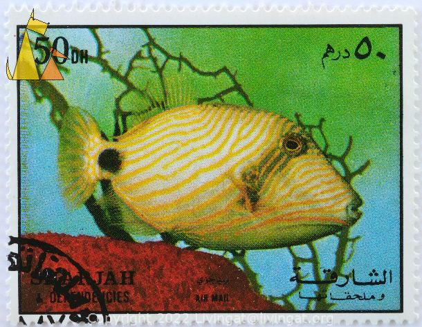 Orangestriped Triggerfish, Sharjah and Dependencies, Sharjah, stamp, fish, air mail, 50 Dh, Balistapus undulatus