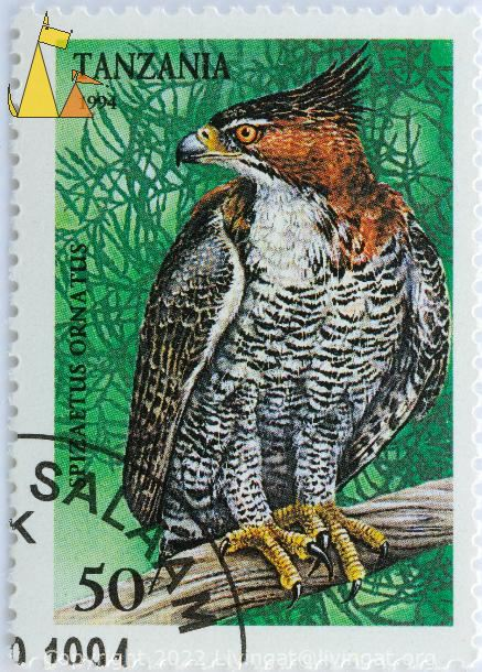 Ornate Hawk-Eagle, Tanzania, stamp, bird, 1994, 50, Dar Es Salam, green, Spizaetus ornatus