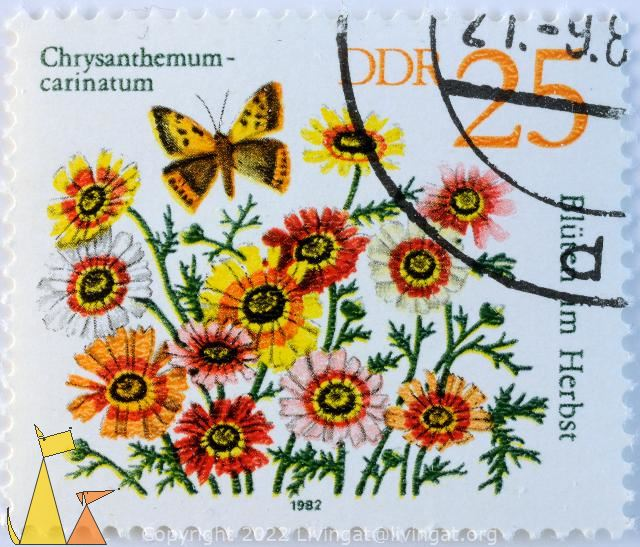 Painted daisys, DDR, Germany, stamp, plant, flower, 25, Chrysanthemum carinatum, Blutem im Herbst, 1982