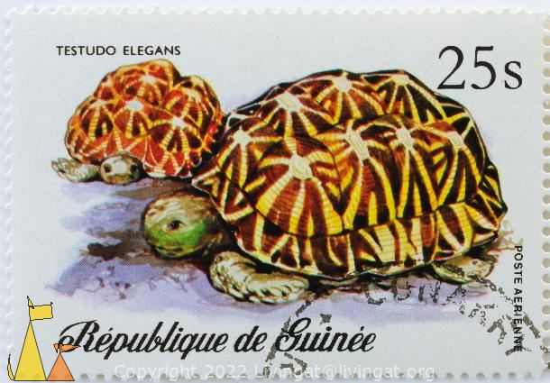 Pair of Indian Stars, Republique de Guinee, Guinea, stamp, turtle, poste Aerienne, 25 s, Testudo elegans, Geochelone elegans