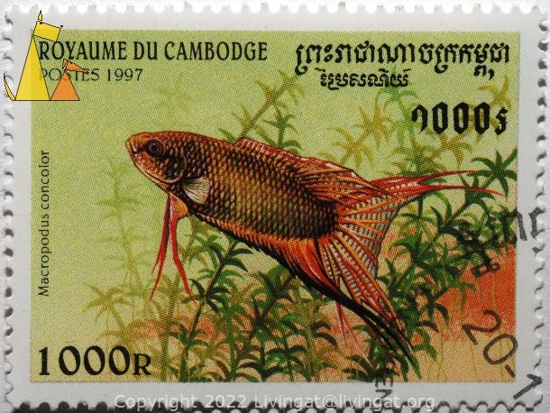 Paradise gourami, Royaume du Cambodge, Cambodia, stamp, fish, Postes, 1997, 1000 R, Macropodus concolor