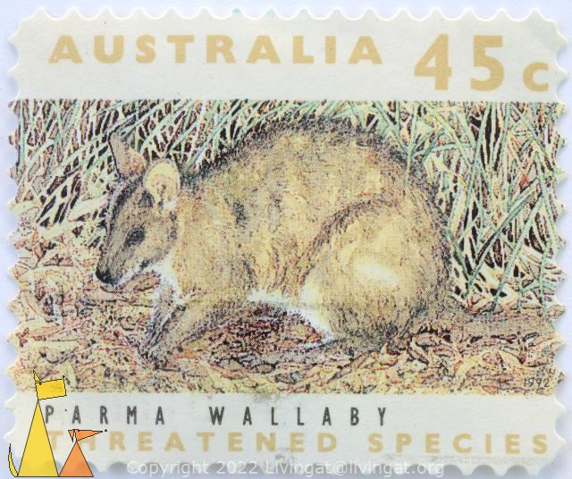 Parma Wallaby, Australia, stamp, mammal, 45 c, threatened species, 1992, Macropus parma