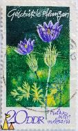 Pasque Flower, DDR, Germany, stamp, plant, flower, 20, Geschutzte Pflanssen, Pulsatilla vulgaris