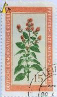 Peppermint, Deutsche Demokratische Republik, DDR, Germany, stamp, plant, flower, Friebel, 15, Pfefferminze, Mentha piperita