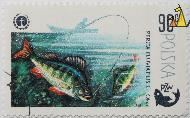 Perch, Polska, Poland, stamp, fish, 90 Gr, Okon, fishing, 1979, PZW, Perca fluviatilis