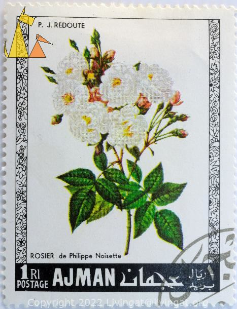 Phillipe Noisette Rose, Ajman, UAE, stamp, plant, flower, rose, Rosier de Philippe Noisette, 1 Rl, Postage, P.J. Redoute, Rosa x noisettiana