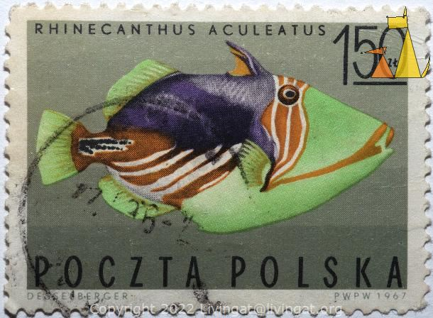 Picasso triggerfish, Polska, Poland, stamp, fish, Desselberger, 1.50 Zl, Poczta, PWPW, 1967, Rhinecanthus aculeatus